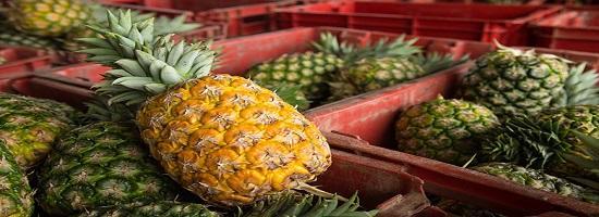 Gh ghana sdf pineapple experts bring skills to ghanas pineapple belt 780x439